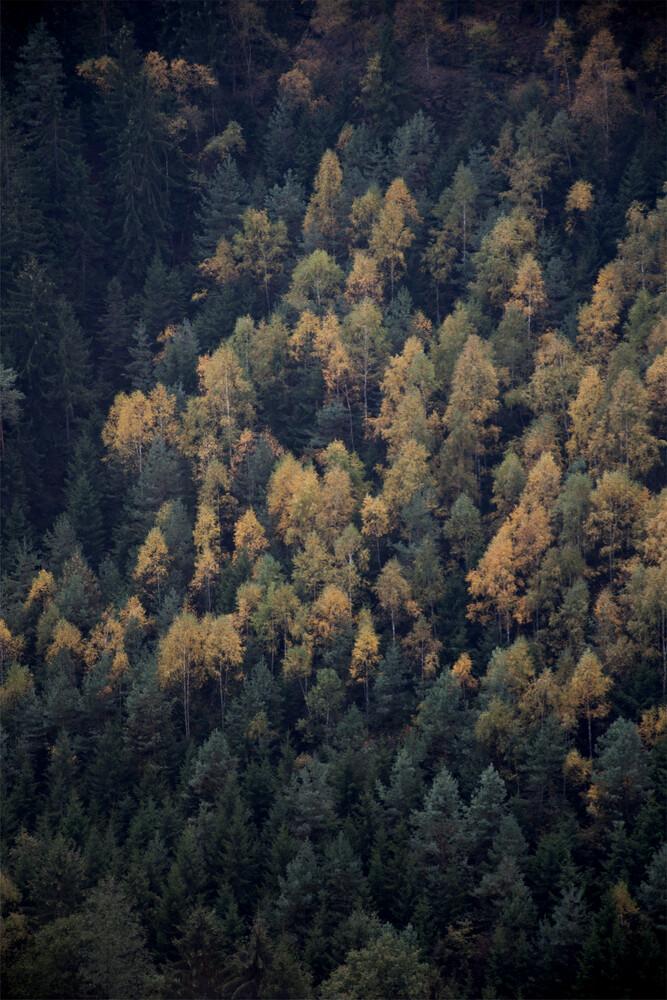 Autumn in all its beauty - fotokunst von Studio Na.hili