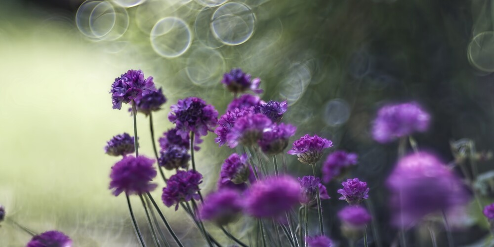 Blume X - Fineart photography by Michael Schulz-dostal