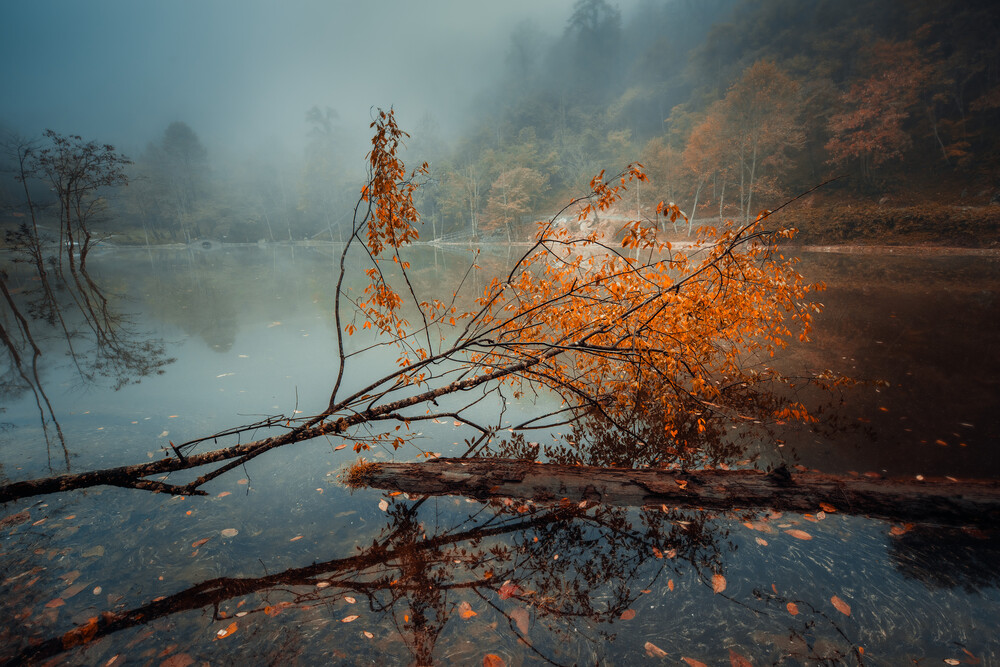A tree in the autumn - Fineart photography by Li Ye