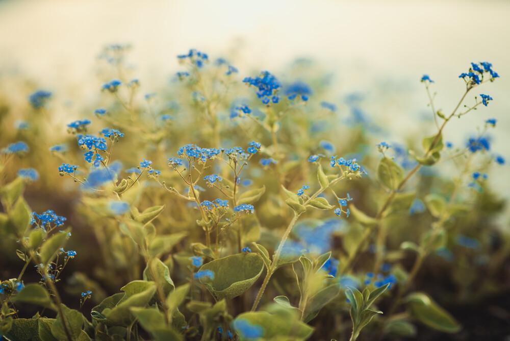 Mauerblümchen - fotokunst von Philipp Awounou