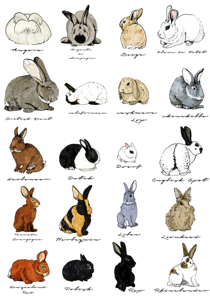 Types of rabbits - fotokunst von Katherine Blower