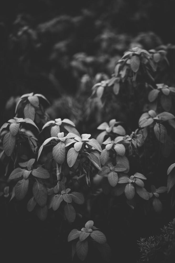 Sanfte Blätter - fotokunst von Andrea Hansen