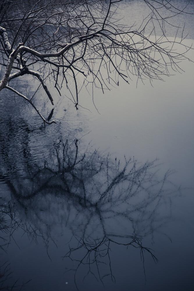 Baumspiegelung - Fineart photography by Andrea Hansen
