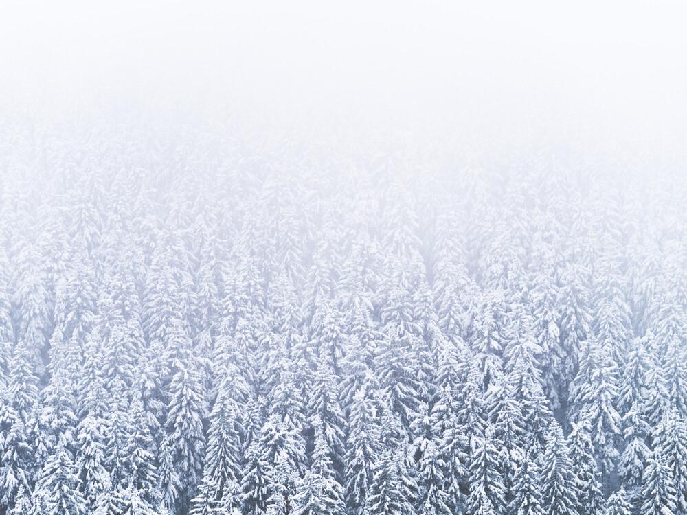 Winterwald - fotokunst von Felix Wesch