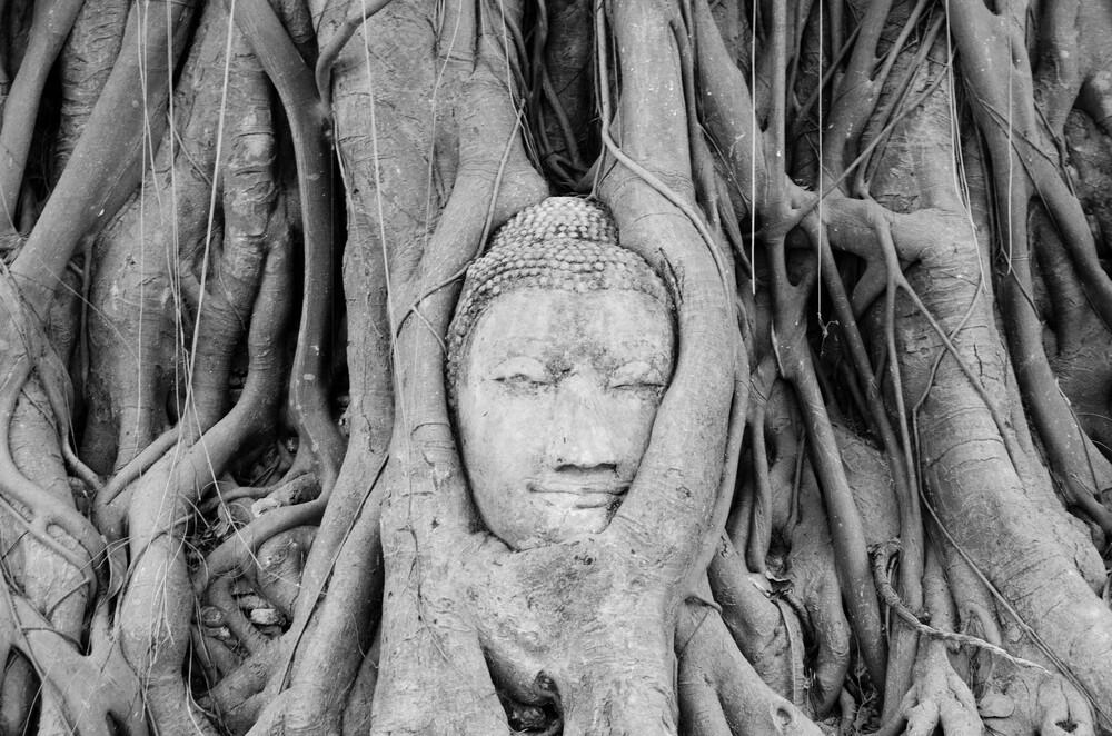 Buddha im Baum - fotokunst von Martin Koch