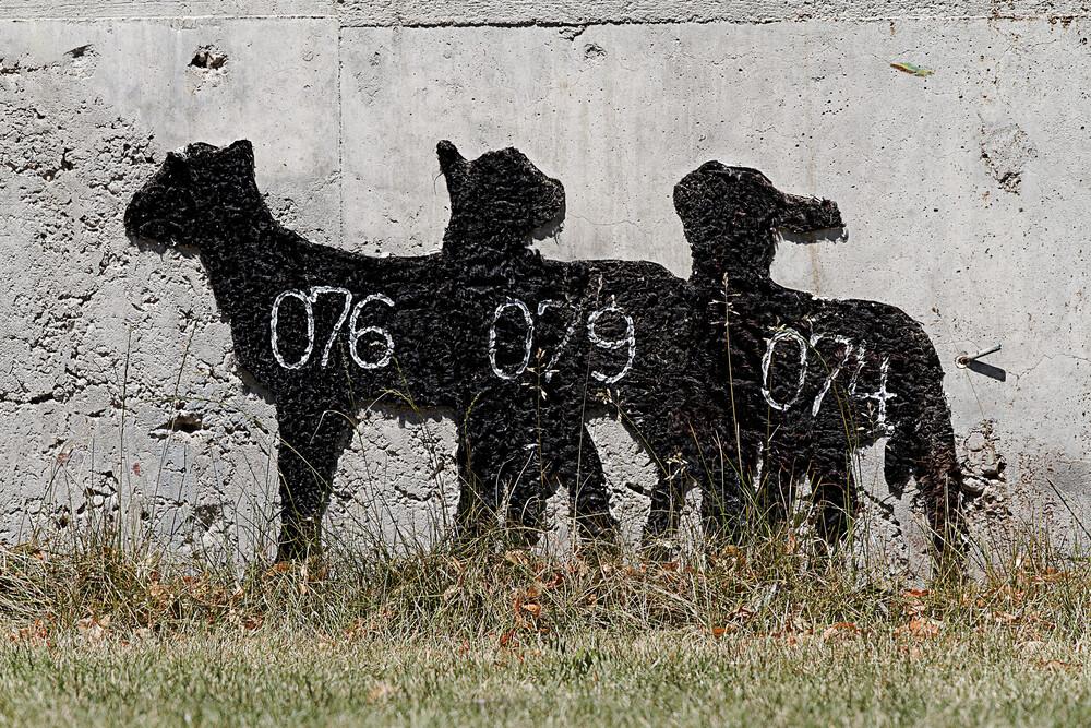 Sheep - fotokunst von Michael Belhadi