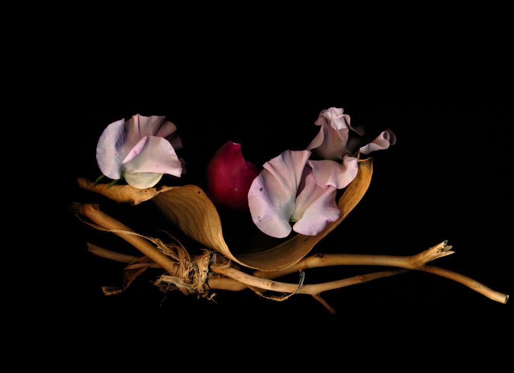 Catrice - fotokunst von Ramona Reimann