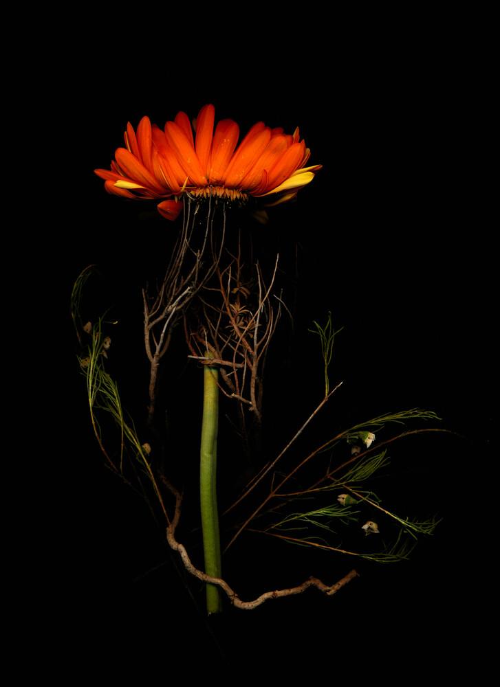 Velda - fotokunst von Ramona Reimann