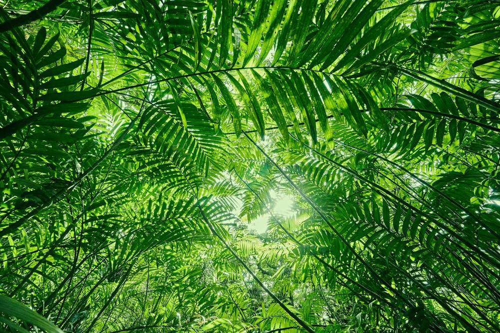 Das Dschungeldach - fotokunst von Marvin Kronsbein