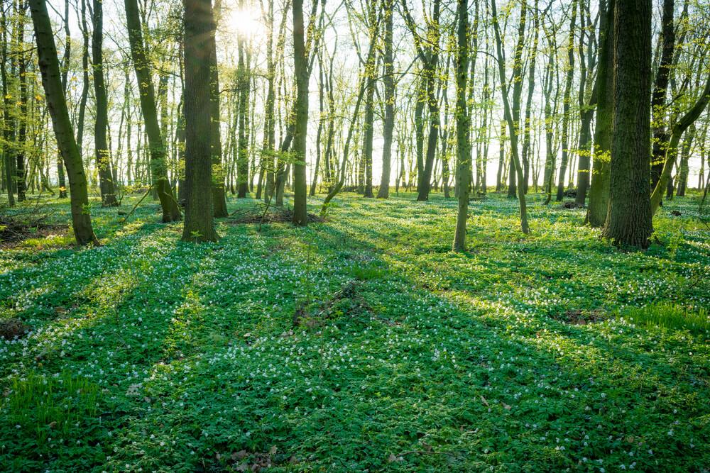 Frühling im Wald - fotokunst von Martin Wasilewski