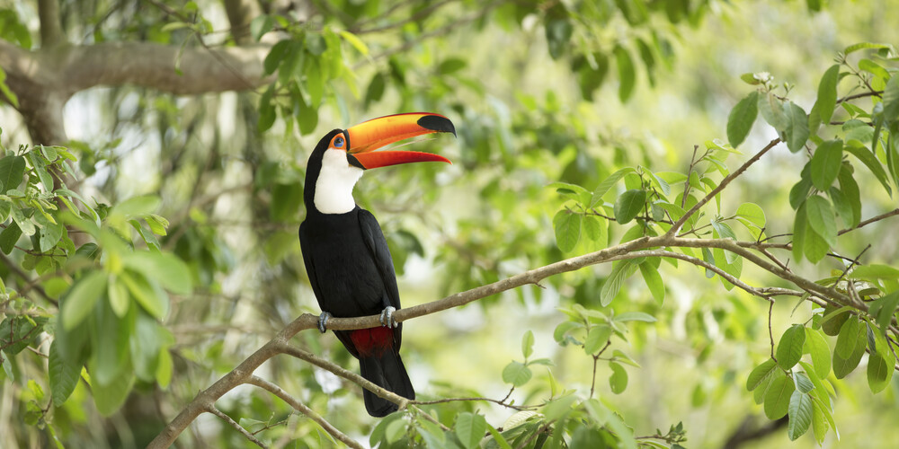 Happy Tucan - Fineart photography by Andreas Adams