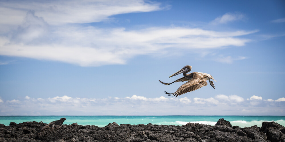 PELICAN AIRWAYS - Fineart photography by Andreas Adams