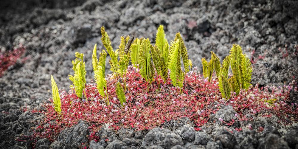 FLOWER ISLAND - fotokunst von Andreas Adams