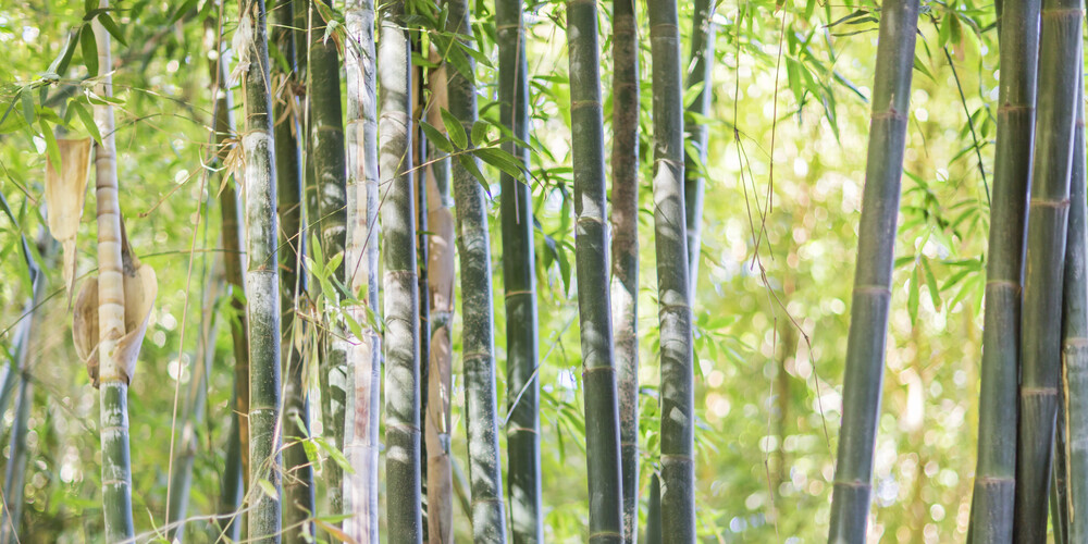 BAMBOO - Fineart photography by Andreas Adams