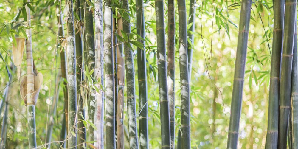 BAMBOO - fotokunst von Andreas Adams