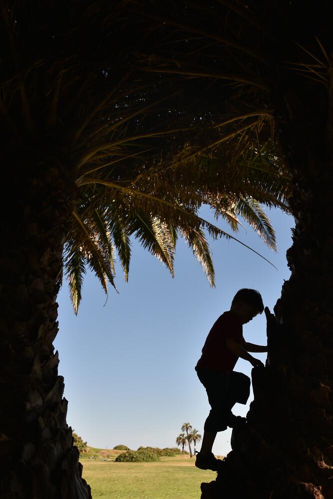 Palmenklettern - fotokunst von Thomas Heinze