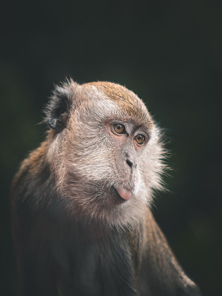 naughty monkey - Fineart photography by Dimitri Luft