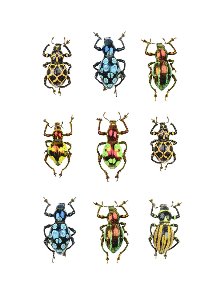 Rarity Cabinet, Beetles like small jewels - Fineart photography by Marielle Leenders