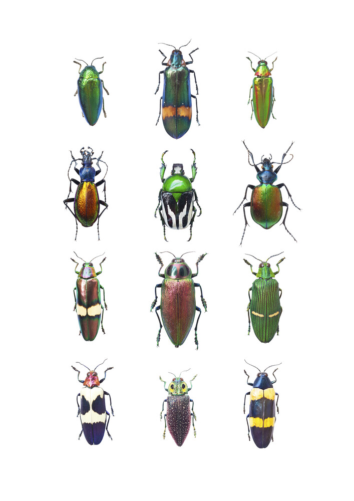 Rarity Cabinet Insect Beetle Mix - fotokunst von Marielle Leenders