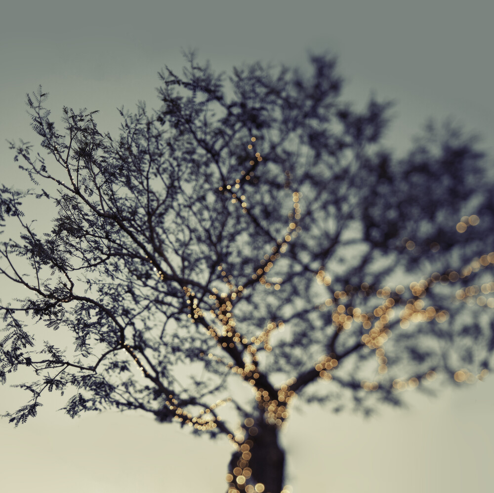 One More Sparkle - fotokunst von Vera Mladenovic