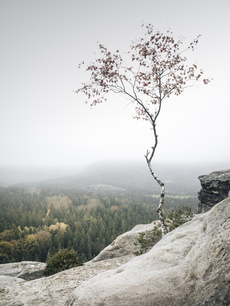 Young Birch - Fineart photography by Ronny Behnert
