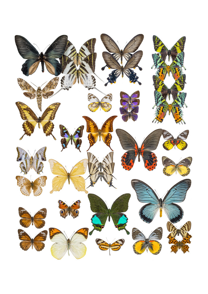 Rarity Cabinet Butterflies Mix 1 - fotokunst von Marielle Leenders