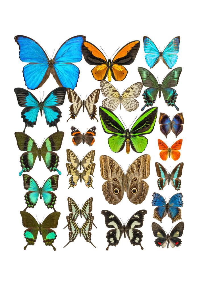 Rarity Cabinet Butterflies Mix 2 - fotokunst von Marielle Leenders
