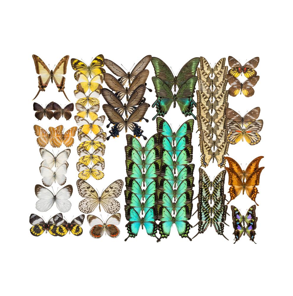 Rarity Cabinet Butterflies Mix 3 - fotokunst von Marielle Leenders