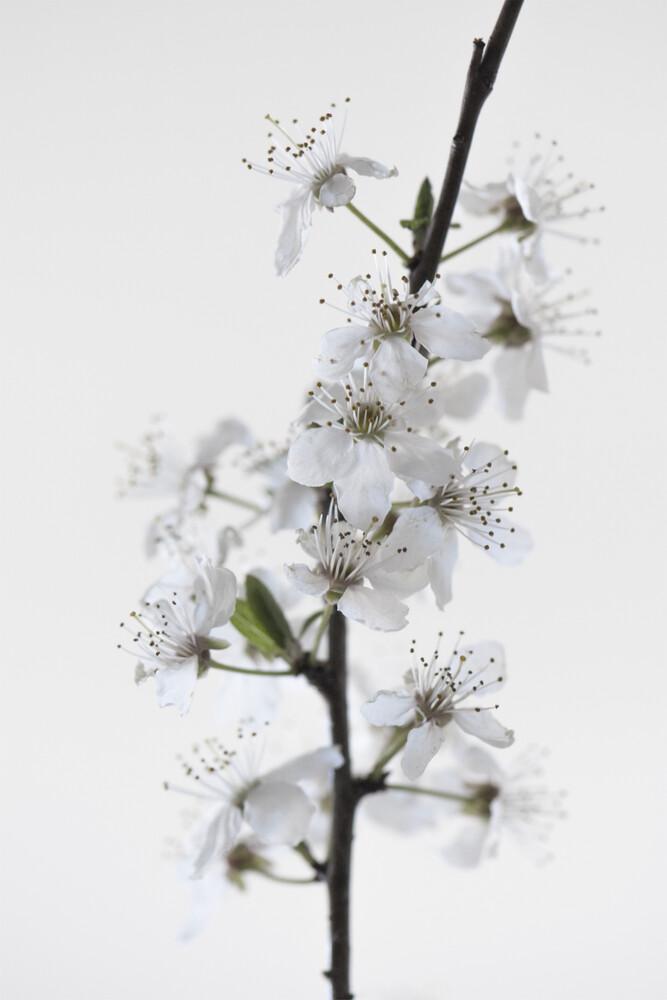 White Blossoms - fotokunst von Studio Na.hili