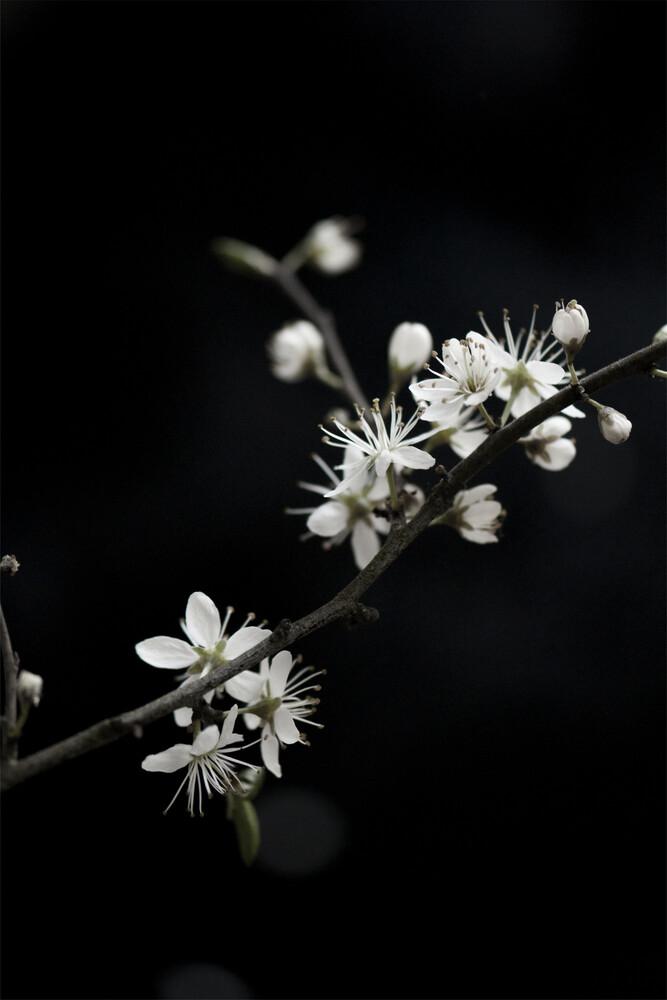 White Loves Black - fotokunst von Studio Na.hili