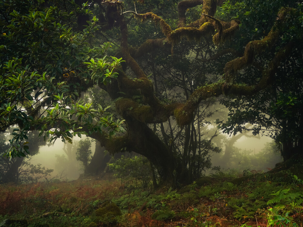 dark forest - Fineart photography by Anke Butawitsch