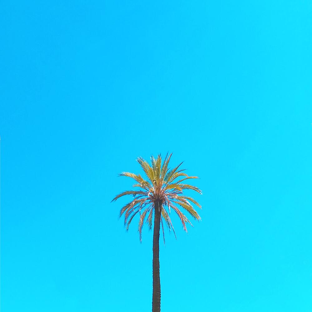 Palm Tree - fotokunst von Kirill Voronkov