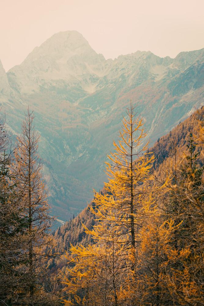 Let's away ... Leuchtende Lärche in den Julischen Alpen - fotokunst von Eva Stadler