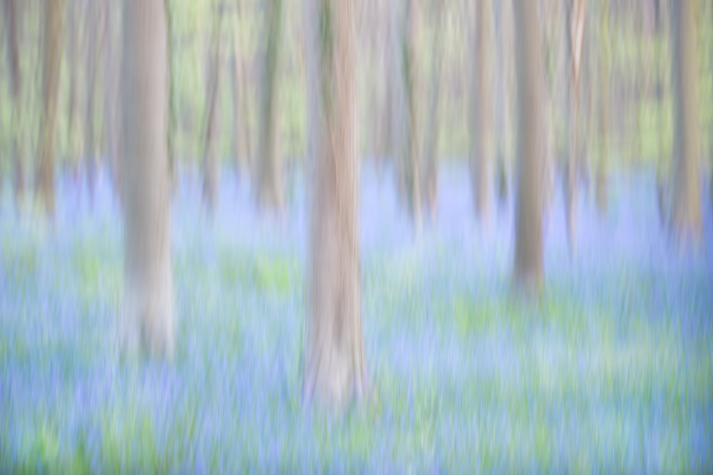 Der Wald der blauen Blüten - fotokunst von Rolf Schnepp