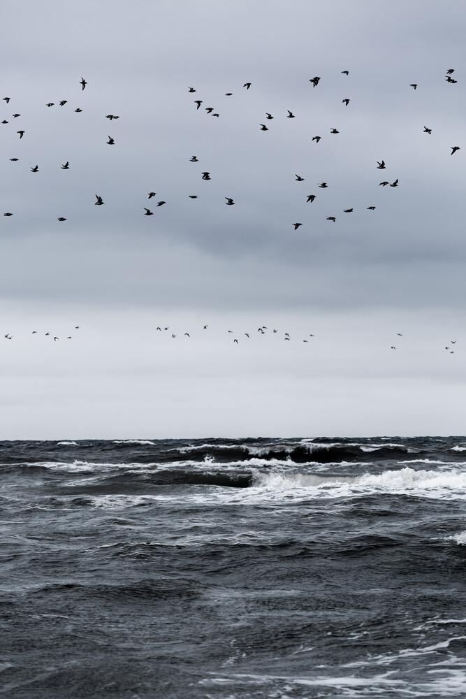 Birds and the Sea - Fineart photography by Mareike Böhmer