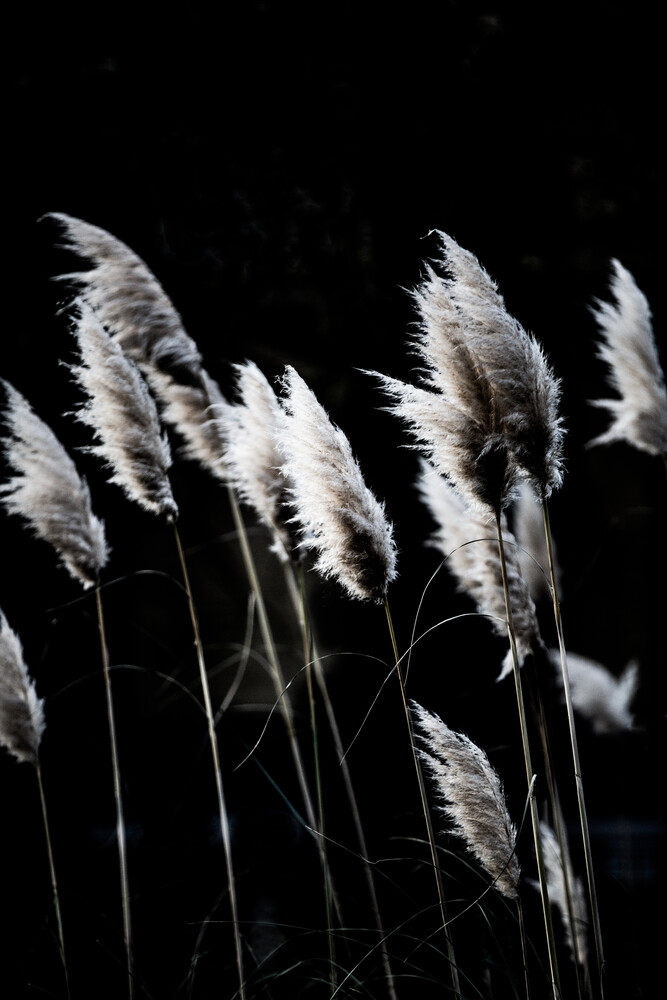 Grass 4 - Fineart photography by Mareike Böhmer