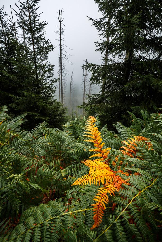 Yellow leaf - fotokunst von Nicklas Walther