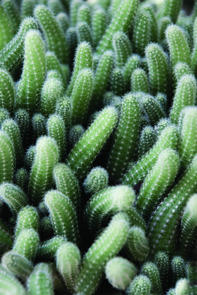 Green Cactus Garden - Fineart photography by Studio Na.hili