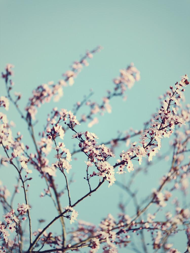 Kirschblüten mit Frühlingshimmel - fotokunst von Nadja Jacke