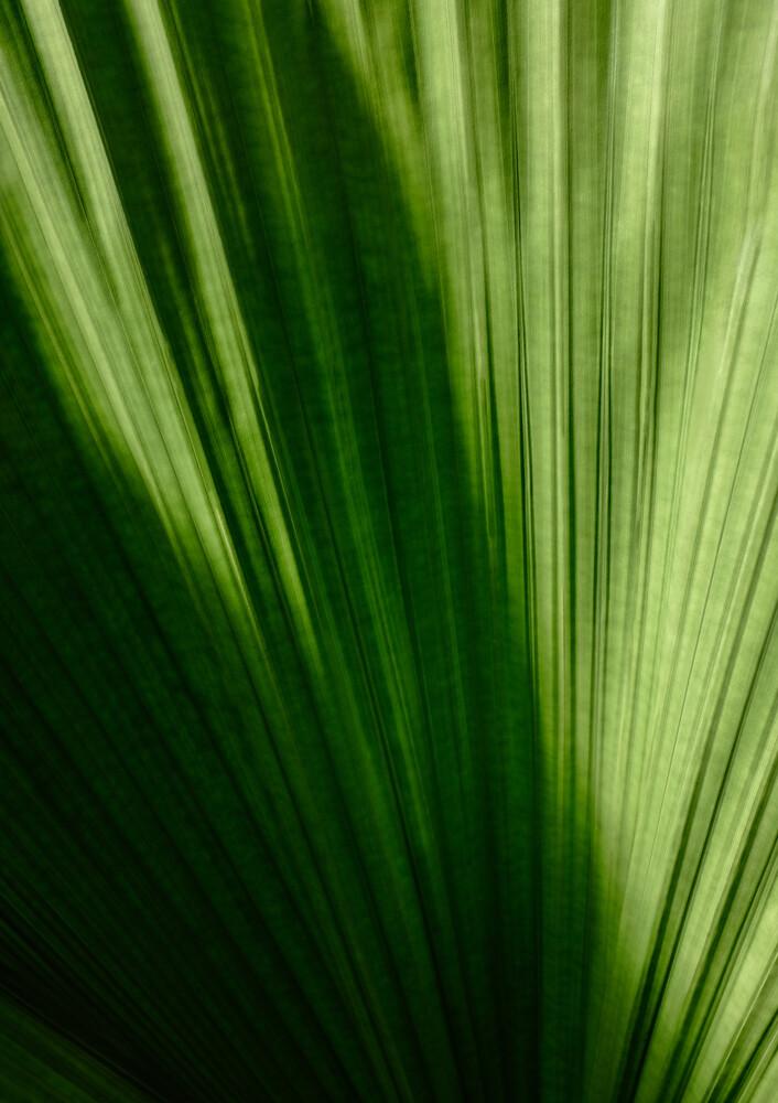 Palmenblatt - fotokunst von Christina Ernst