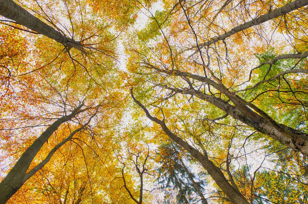 Herbstfarben - fotokunst von Rolf Schnepp