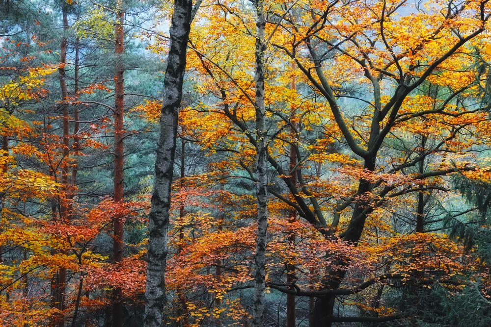 Herbst in den Wäldern - fotokunst von Rolf Schnepp