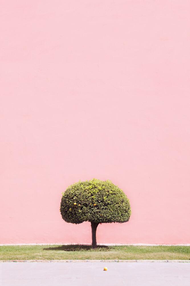 Orange Tree - fotokunst von Rupert Höller