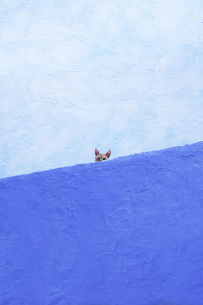 Spy Cat - Fineart photography by Rupert Höller