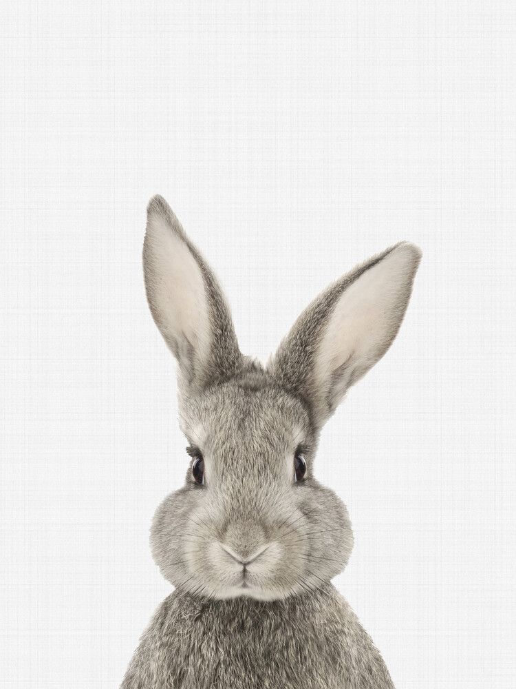Rabbit - Fineart photography by Vivid Atelier