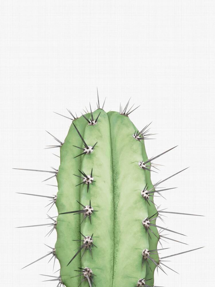 Cactus 2 - fotokunst von Vivid Atelier