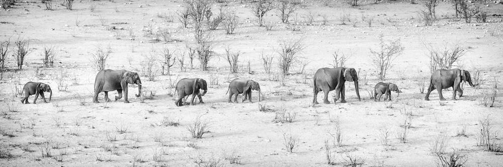 Elefantenparade - fotokunst von Dennis Wehrmann