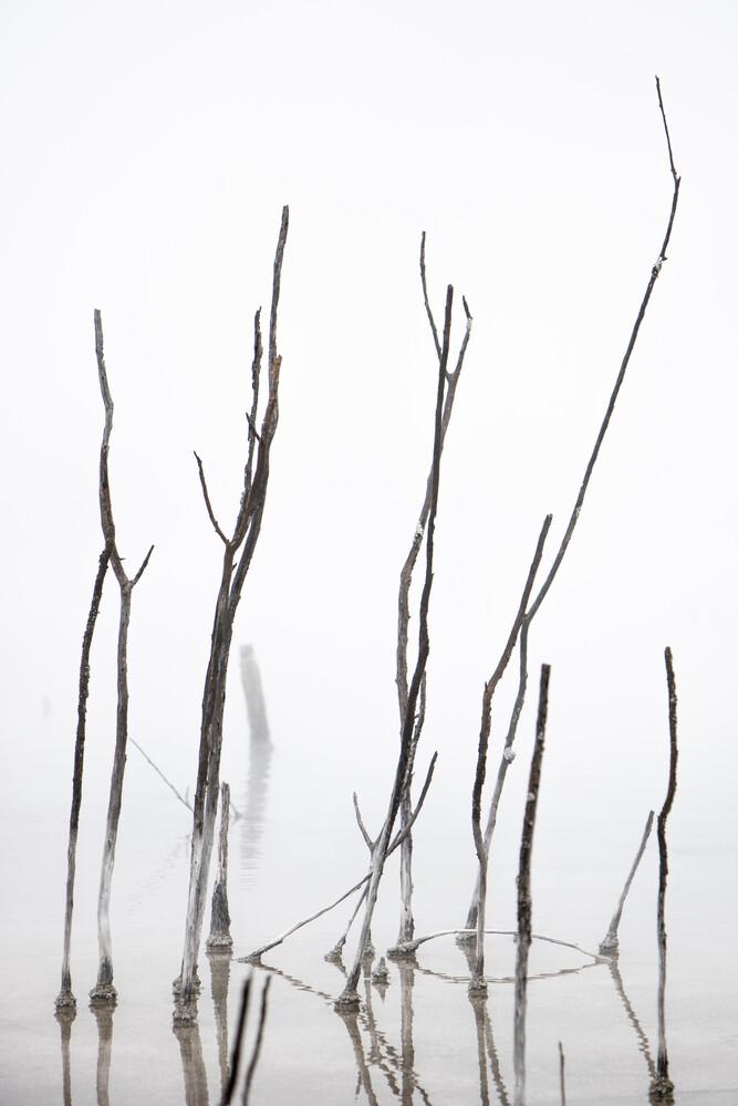 Äste im Nebel - fotokunst von Marius Kayser