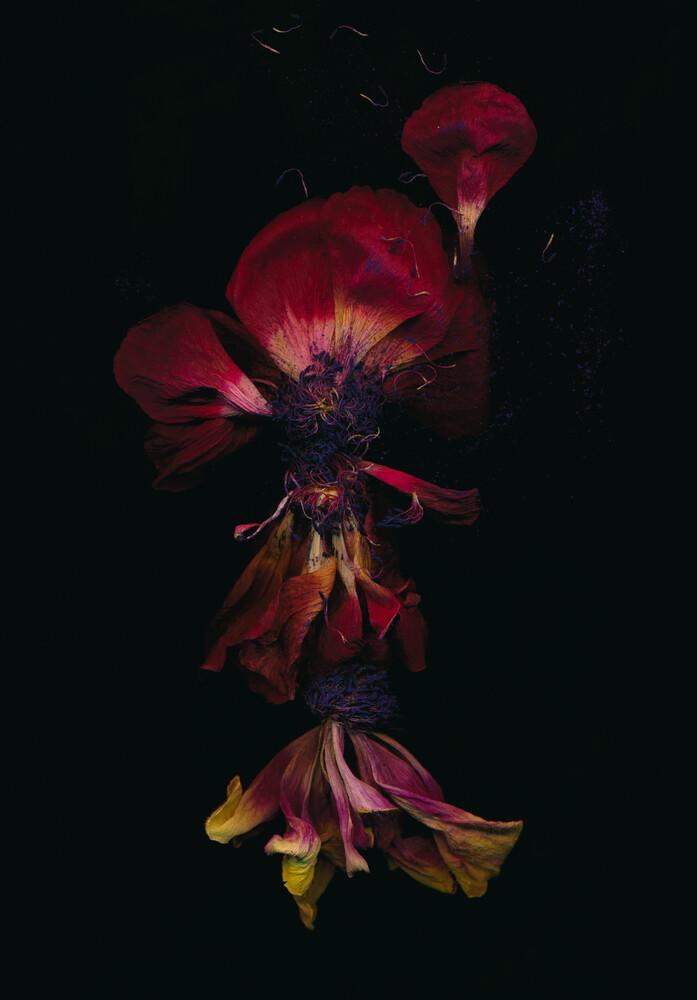 Ariel - fotokunst von Ramona Reimann