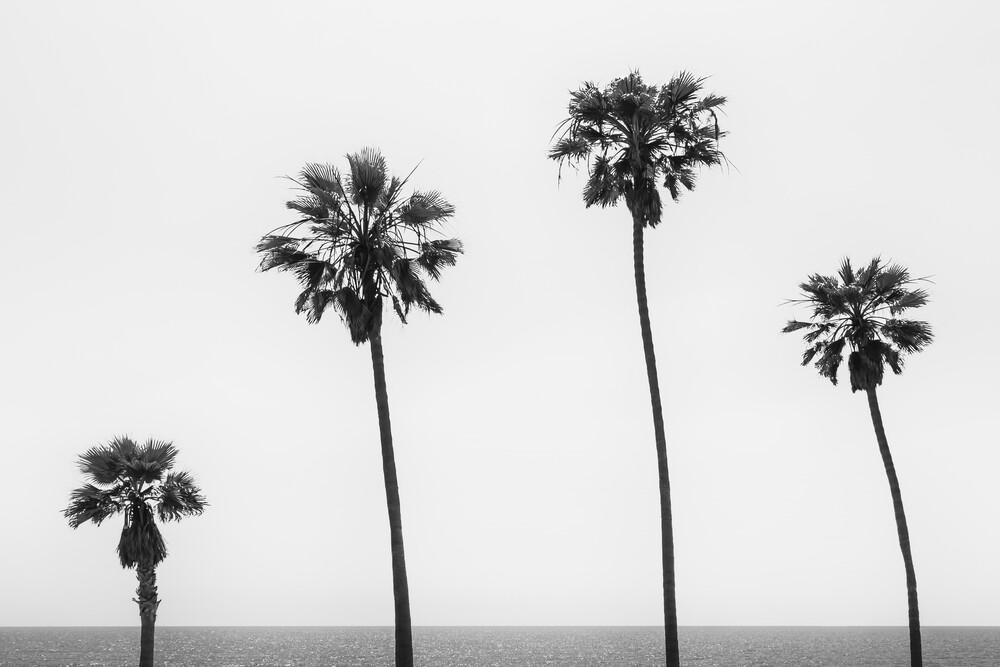 Palmen am Meer in Monochrom - fotokunst von Melanie Viola